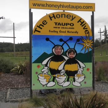 Honey Hive - busy bees!